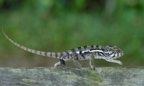 Zdjecie MADAGASKAR / Północny Wschód / Parc National de Masoala / Świat(o) i pogląd ;-)