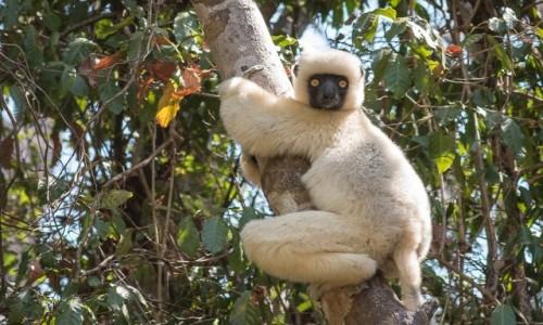 MADAGASKAR / Bekopaka / Petite Tsingy de Bemaraha / i co się gapisz...