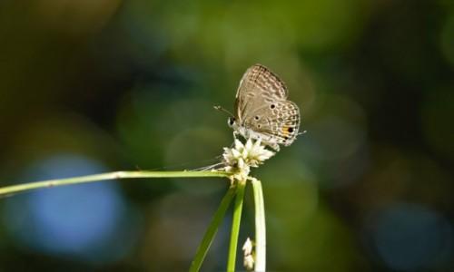 MADAGASKAR / Pólnocny Wschód / Parc National de Masoala / Po deszczu ;-)