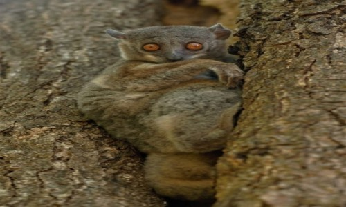 MADAGASKAR / Północny Zachód / Parc National des Tsingy de Bemaraha / Pas de pitié ... :-)))