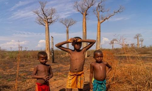 MADAGASKAR / Toliara / w drodze / Pod baobabami