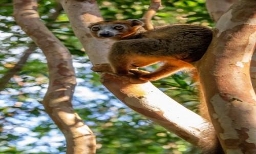 Zdjęcie MADAGASKAR / Madagaskar wschodni / Palmarium Reserve / Zaparłem się