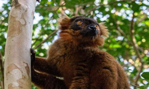 Zdjęcie MADAGASKAR / Madagaskar wschodni / Palmarium Reserve / Wzrok do nieba