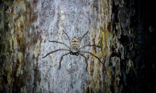 MADAGASKAR / Morondawa / Camping Lovers Baobab / Pająk