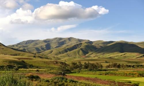 MADAGASKAR / zachodni Madagaskar / gdzieś po drodze / Zielone cienie