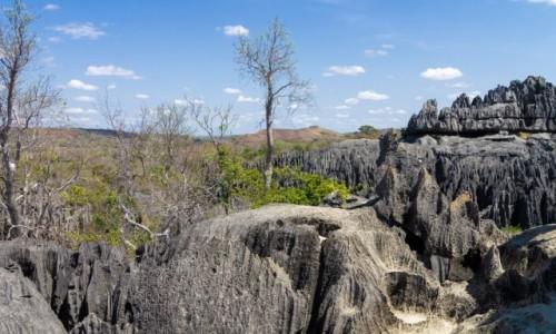 Zdjecie MADAGASKAR / Madagaskar wschodni / Tsingy de Bemaraha / Szpilki