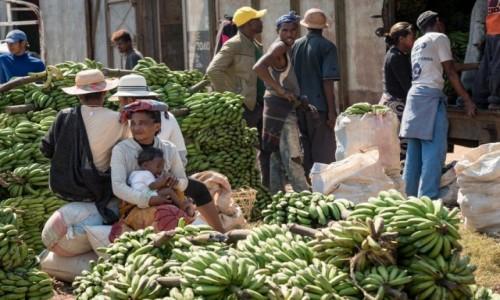 MADAGASKAR / Fianarantsoa / Voamasina / bananowy (k)raj...