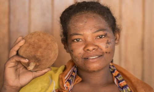 MADAGASKAR / Zachodni / Avenue des Baobabs / Fruit de Baobab(-ka) ;-)