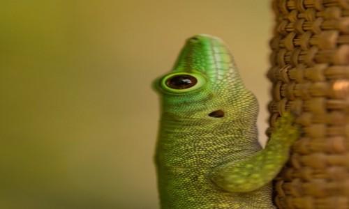 Zdjecie MADAGASKAR / Zachodni / Parc National des Tsingy de Bemaraha / Nie wszyscy ... ;-)