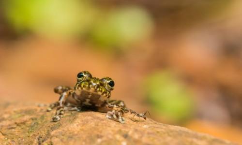 MADAGASKAR / Pólnocny Wschód / Parc National de Masoala / Dawid i ... Goliat 😁