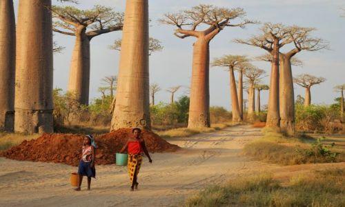 Zdjęcie MADAGASKAR / - / okolice Morondawy / aleja baobabów - kobiety