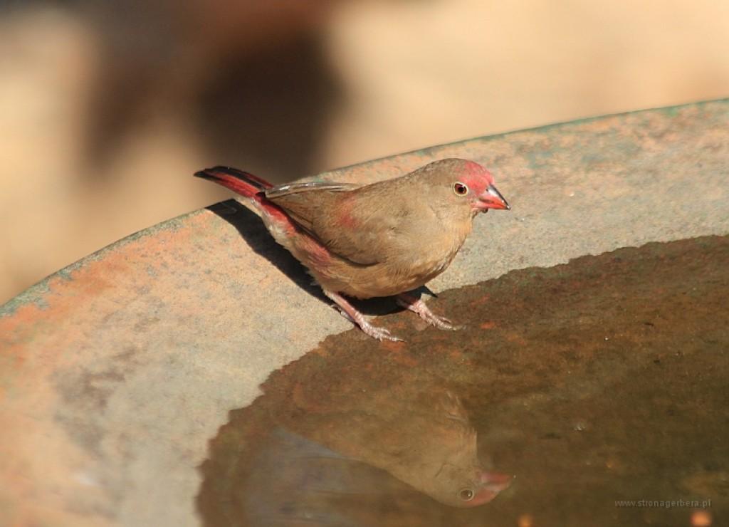 Zdjęcia: Malawi, Malawi, Na jeziorem Malawi, MALAWI