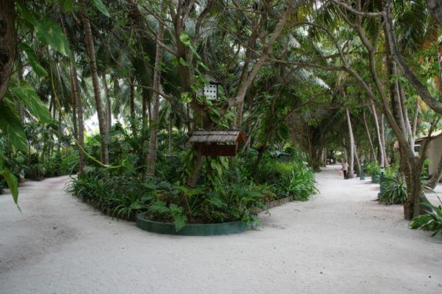 Zdj�cia: Summer Island Village, Pln. Atol, Raj na ziemi, MALEDIWY