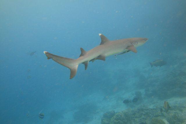 Zdjęcia: Ryf  wyspy Biyadhoo, Jak daleko do brzegu?, MALEDIWY