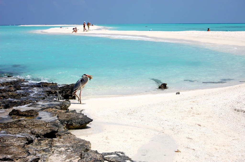 Zdjęcia: Kuramati, Malediy, Kuramati , MALEDIWY