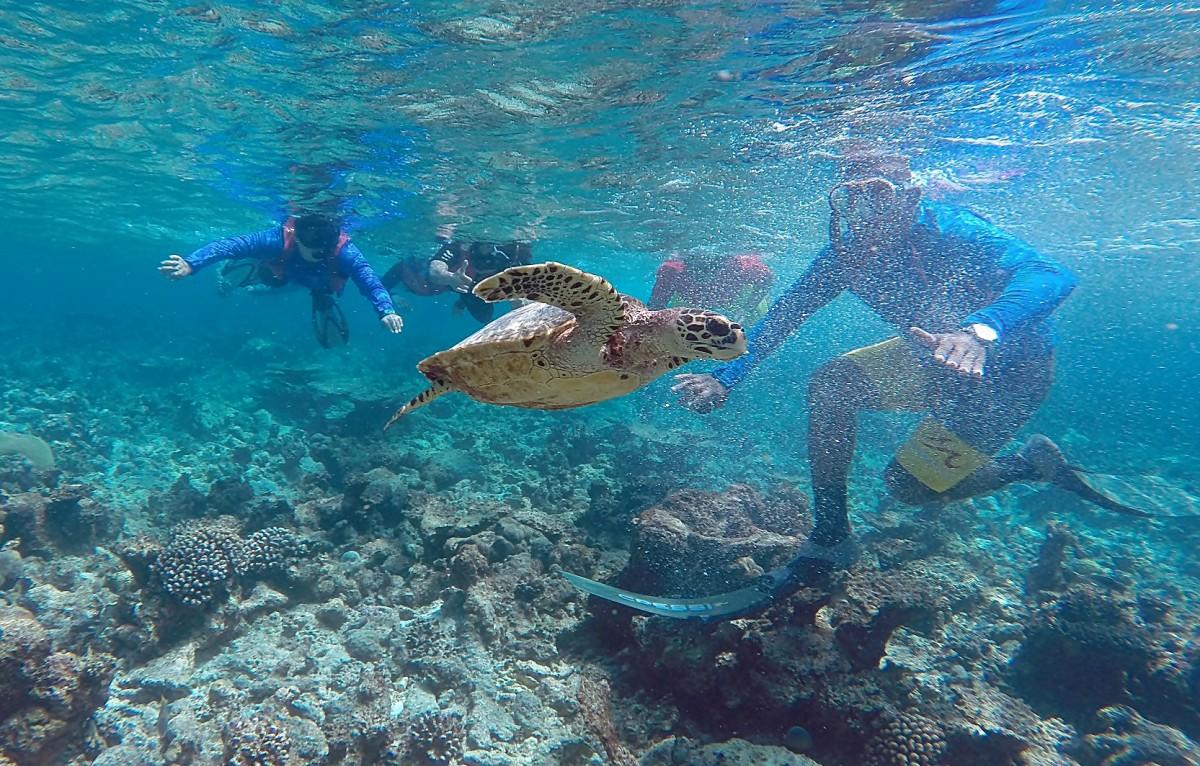Zdjęcia: Ocean, jw, Dopadli żółwia, MALEDIWY