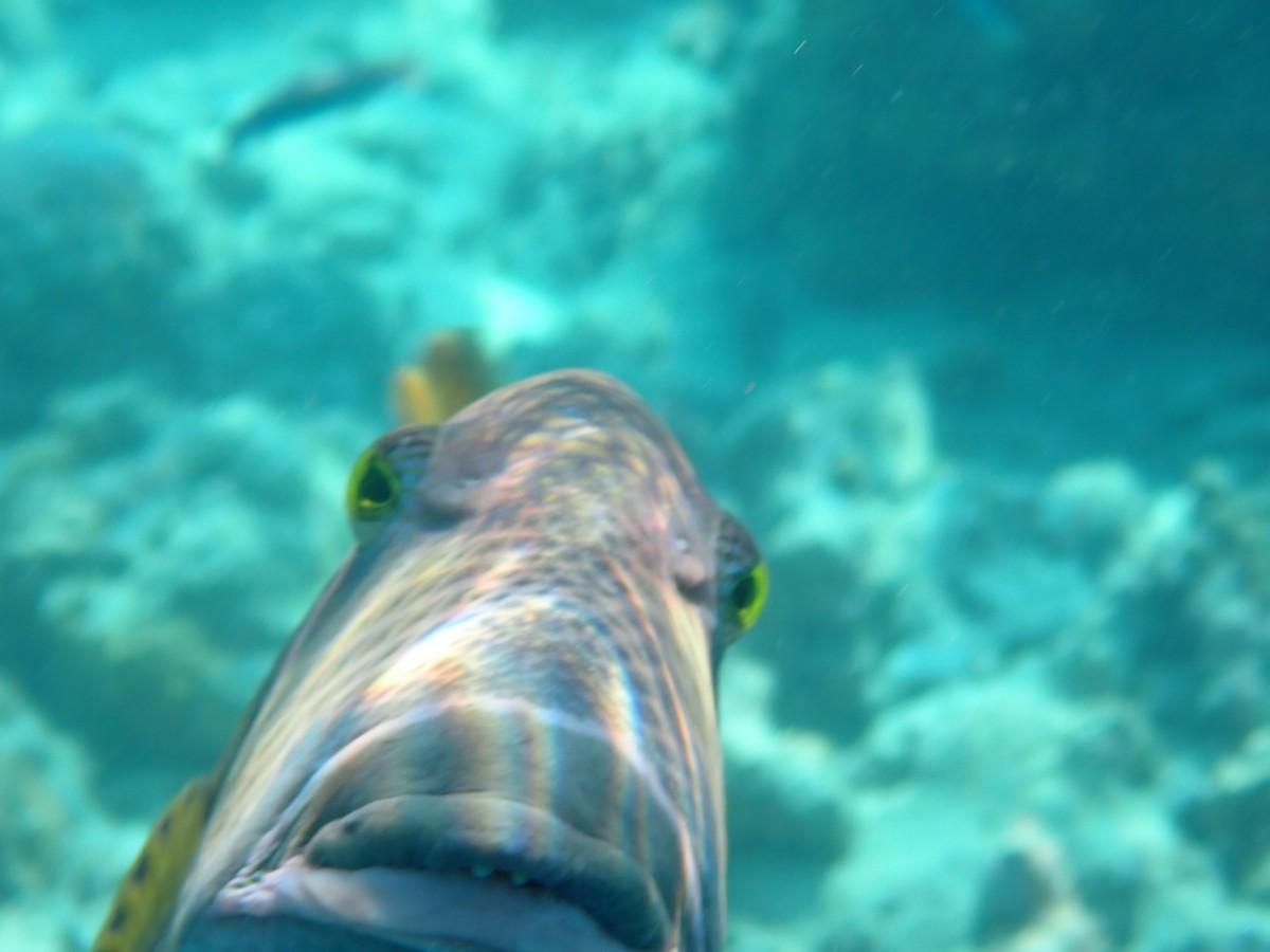 Zdjęcia: Bezludna wyspa , Agresywna rybka , MALEDIWY