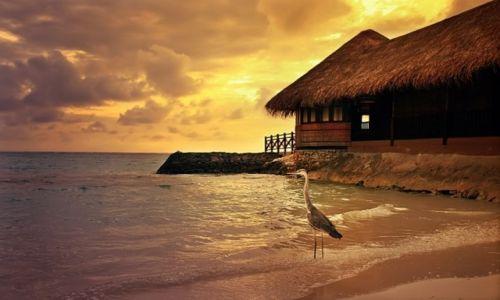 Zdj�cie MALEDIWY / P�nocny Atol Male / P�nocny Atol Male / Beach ...
