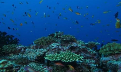 Zdjęcie MALEDIWY / - / Malediwy / Nurkowanie/ Diving