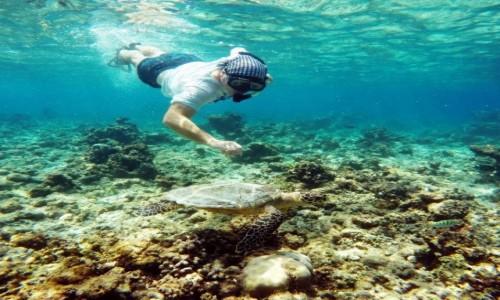 Zdjecie MALEDIWY / North Atol / Ocean / W pogoni za żółwiem