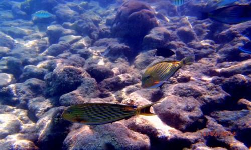 Zdjecie MALEDIWY / Atol Kaafu / Paradise Island / Podwodny Świat