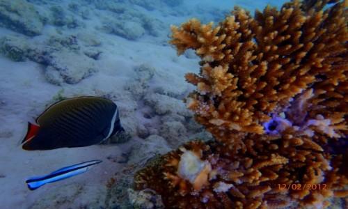 Zdjecie MALEDIWY / Atol Kaafu / Paradise Island / Nurkowanie
