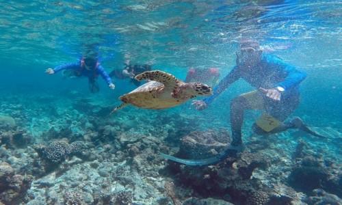 Zdjęcie MALEDIWY / jw / Ocean / Dopadli żółwia