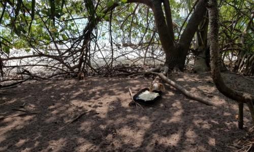 Zdjecie MALEDIWY / Malediwy / Malediwy / Malediwskie króliki