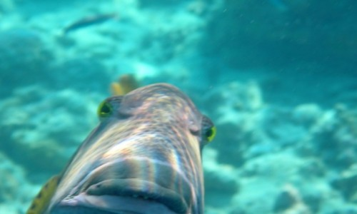 Zdjecie MALEDIWY / - / Bezludna wyspa  / Agresywna rybka