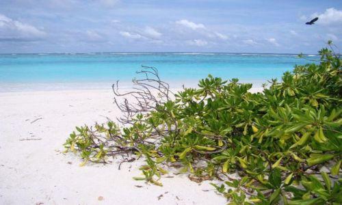 Zdjęcie MALEDIWY / Ari Atoll / Sun Island / Malediwy 13