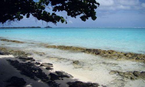 Zdjęcie MALEDIWY / Ari Atoll / Sun Island / Malediwy 17