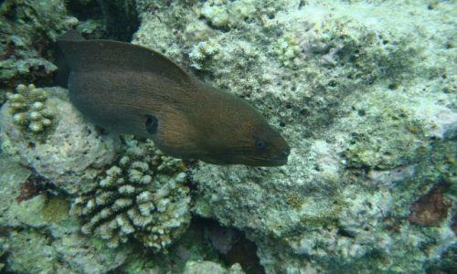 Zdjecie MALEDIWY / brak / Ryf  wyspy Biyadhoo / Spotkanie