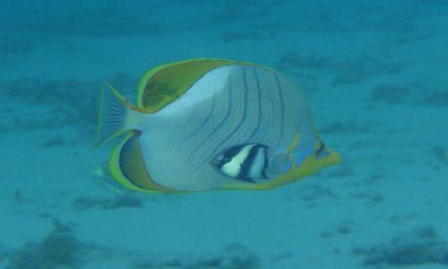 Zdjecie MALEDIWY / Ari Atoll / Sun Island / co dwie głowy to nie jedna