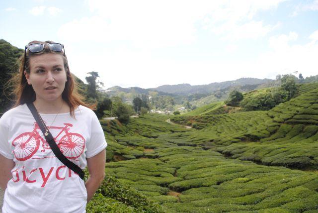 Zdjęcia: Cameron Highlands, Cameron Highlands, Na polach herbacianych, MALEZJA