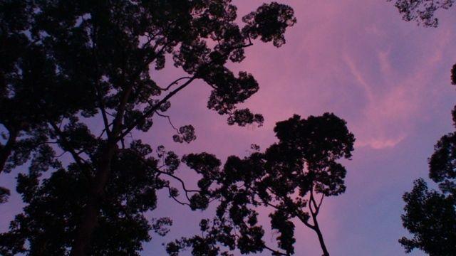 Zdjęcia: Sepilok, Borneo, Zachód słońca w  dźungli, MALEZJA