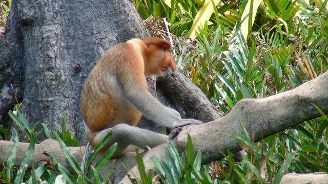 Zdjęcia: Borneo, Borneo, wódz, MALEZJA