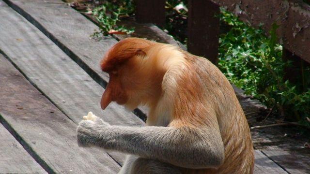 Zdj�cia: Borneo, Borneo, co tu mam do zjedzenia, MALEZJA