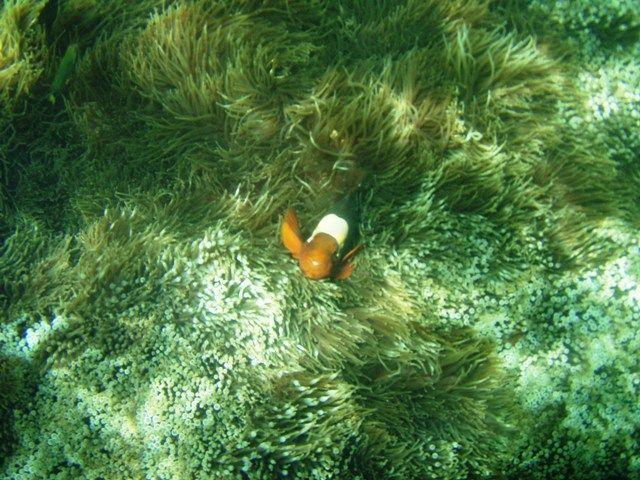 Zdjęcia: Borneo, Borneo, uśmiechnięta rybka, MALEZJA