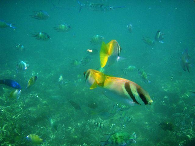 Zdj�cia: Borneo, Borneo, kolorowe rybki na rafie, MALEZJA