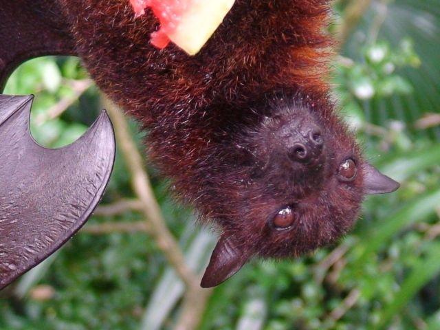 Zdjęcia: Borneo, Borneo, lubię arbuzy, MALEZJA
