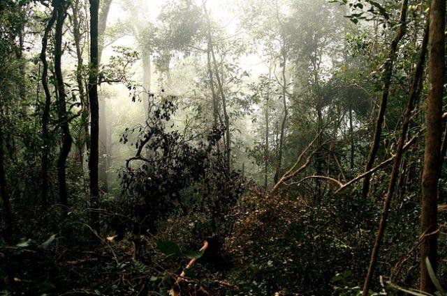 Zdjęcia: Borneo, Park Kinabalu_, MALEZJA
