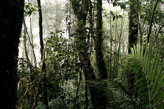 Zdjęcia: Borneo, Park Kinabalu___, MALEZJA