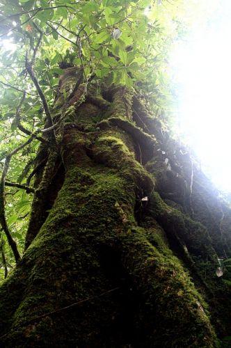 Zdjęcia: Borneo, Kinabalu, MALEZJA