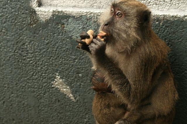 Zdjęcia: batu caves, Małpia seria3, MALEZJA