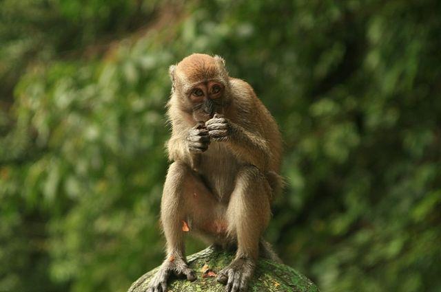 Zdjęcia: batu caves, Małpia seria4, MALEZJA