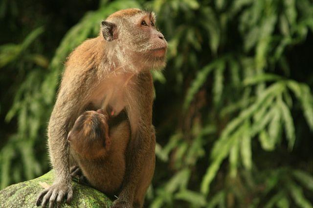 Zdjęcia: batu caves, Małpia seria6, MALEZJA