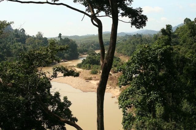 Zdjęcia: Taman Negara, Widok z wiszącego mostu, MALEZJA