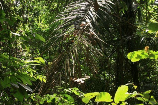 Zdjęcia: płw.malezyjski, Taman Negara , MALEZJA