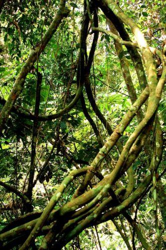 Zdjęcia: płw.malezyjski, Taman Negara 3, MALEZJA