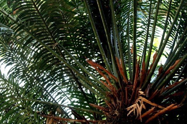 Zdj�cia: p�w.malezyjski, Taman Negara 5, MALEZJA